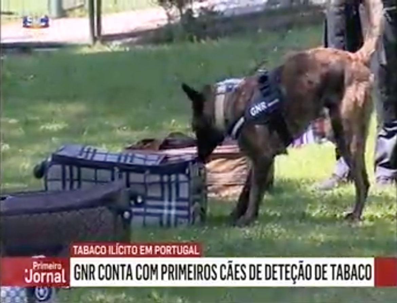 VÍDEO: Portugal presenta a sus primeros perros detectores de tabaco
